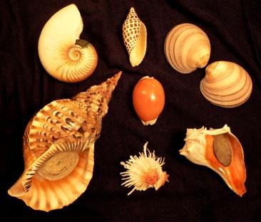misc shells